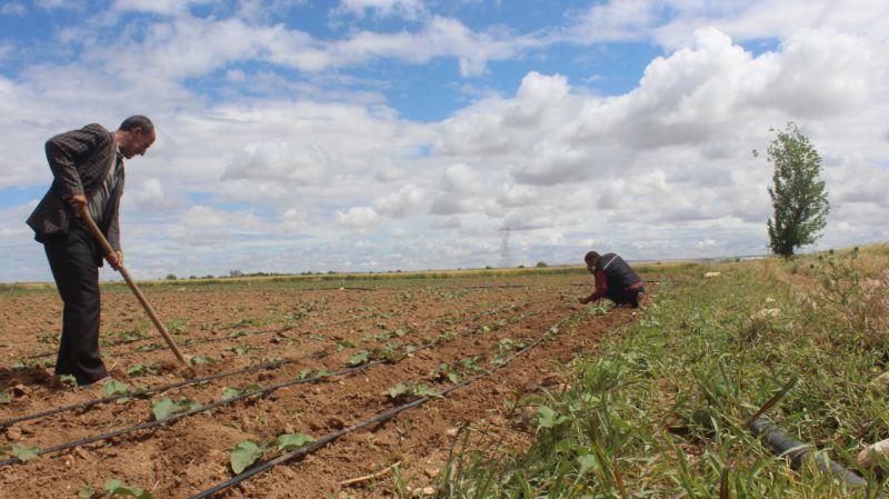 Şanlıurfalı çiftçiler, bayramda da üretimlerini sürdürüyor