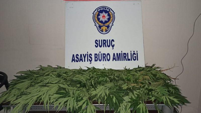 Şanlıurfa'da uyuşturucu operasyonunda 1 şüpheli gözaltına alındı