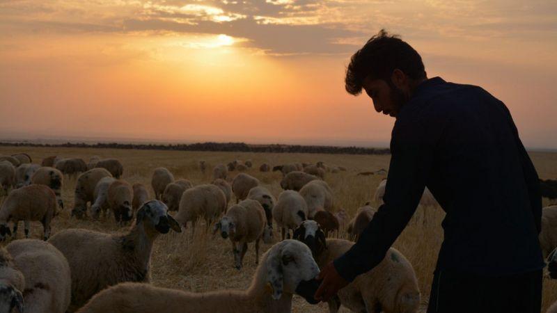 Şanlıurfa'da çoban, Kocaeli'nde hekim adayı