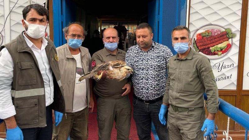 Urfa'da yaralı halde bulundu! Tedavi altına alındı