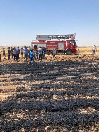 Urfa'da ekin yangınları başladı