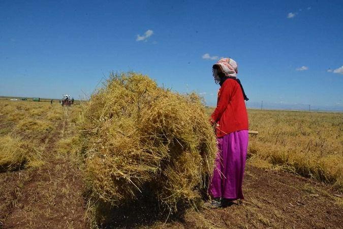 Tarım işçisi kadınlar hakkını alamıyor!