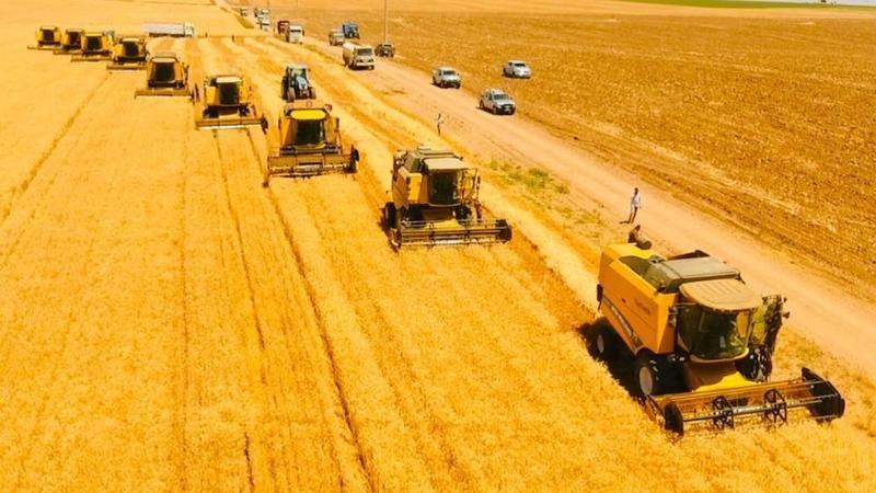 Şanlıurfa'da bulunuyor: Dünyanın en büyüğünde hasat başladı!