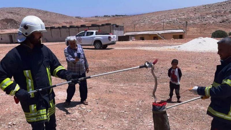Urfa'da zehirli yılan paniği