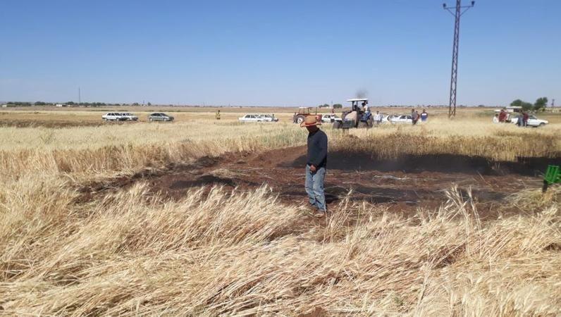 Urfa'da Buğday tarlasında yangın nöbeti