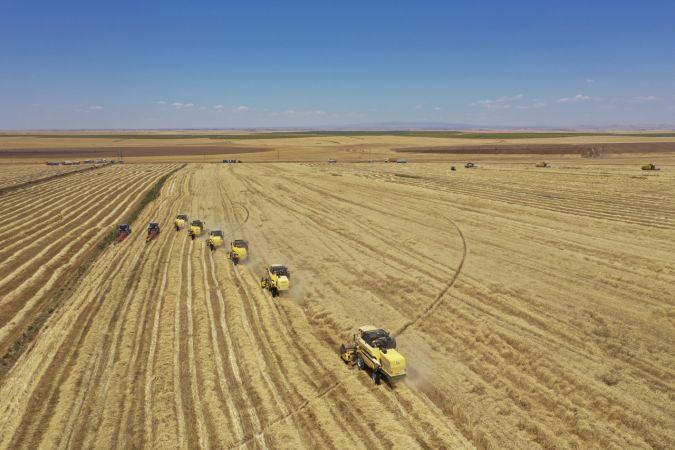 Şanlıurfa'daki Türkiye'nin en büyük işletmesinde hasat dönemi