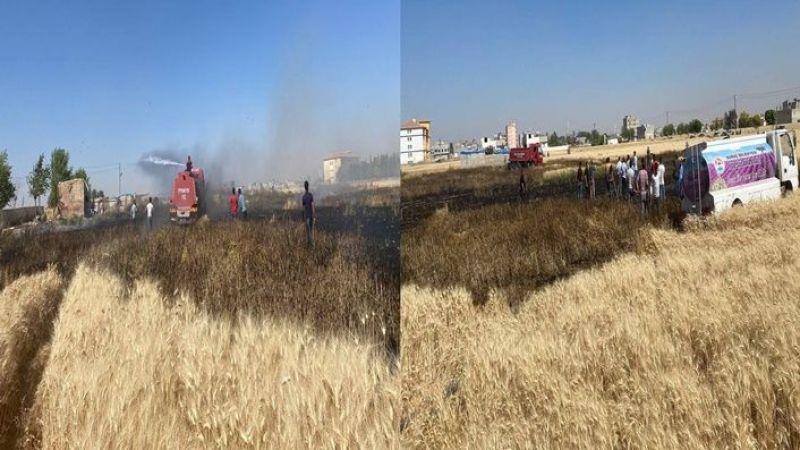Urfa'da Buğday ekili tarlada yangın! Köylüler seferber oldu