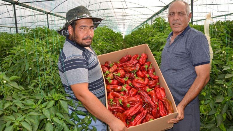 Urfa'nın acısı çiftçiye umut oldu