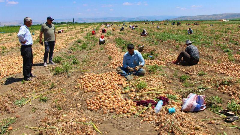 """Urfalı tarım işçisi: ''Çiftçi kazanacak ki biz de kazanalım"""""""