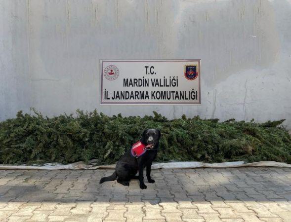 Mardin'den kaçtı Urfa'da yakalandı