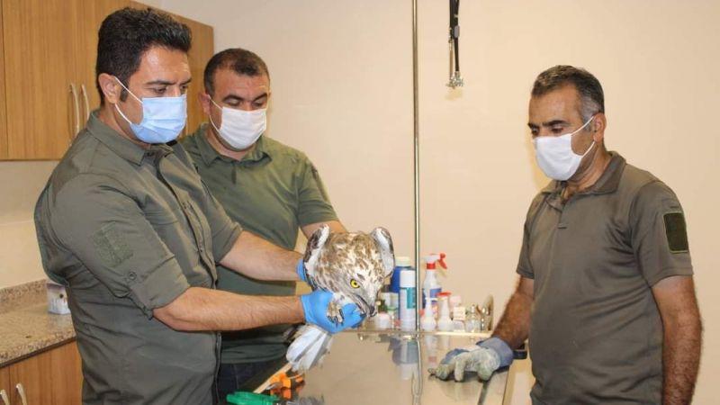 Urfa'da Tedavi edilen kuşlar doğaya salınıyor