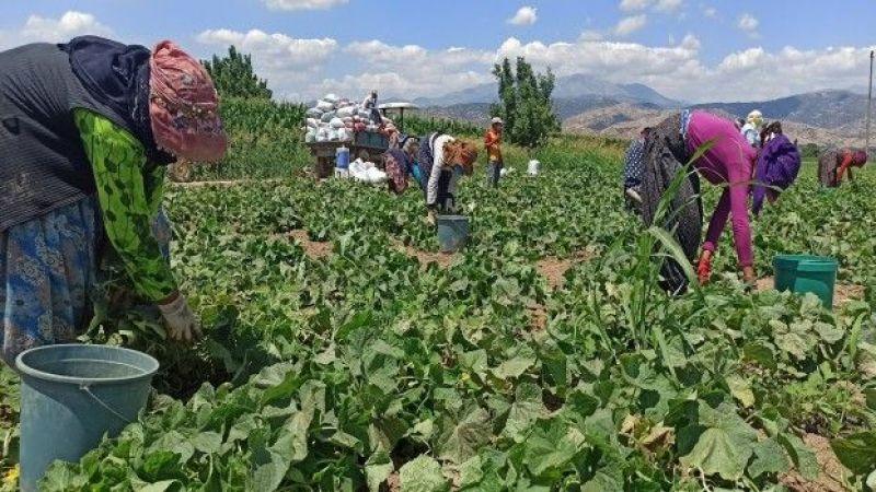 Urfalı tarım işçilerinin kan ter içinde ekmek mücadelesi