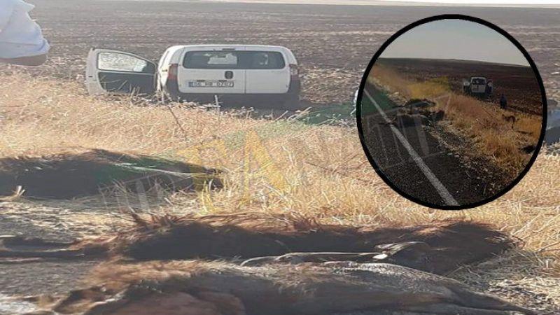 Urfa'da araç keçi sürüsüne daldı: 10 ölü