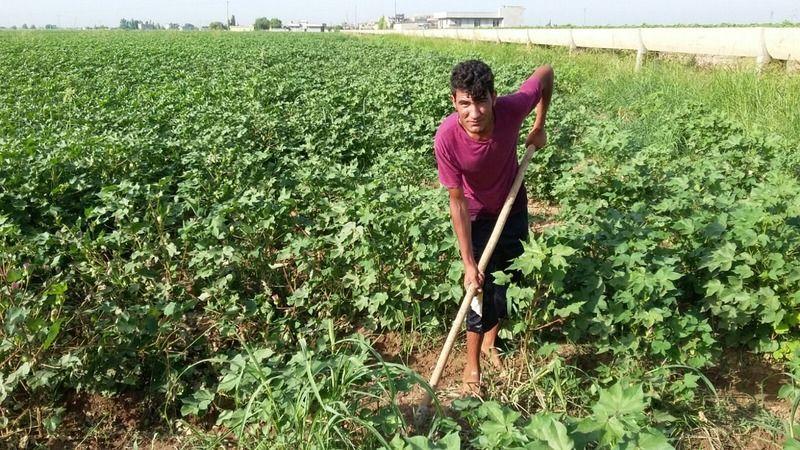 Urfa'da çiftçilerin sıcaklığı iki katına çıkıyor