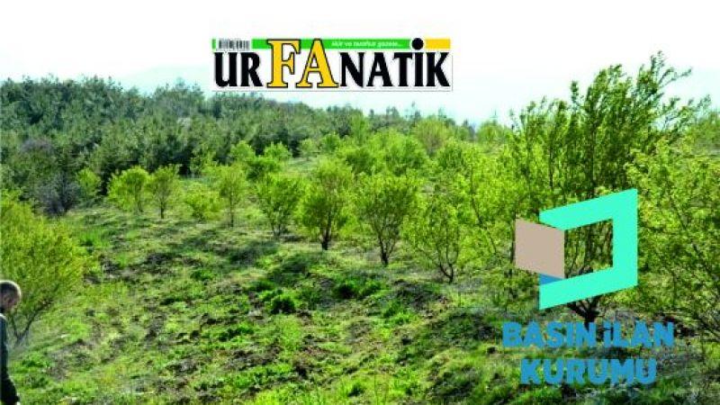 Ağaçlandırma saha hazırlığı hizmeti alınacaktır