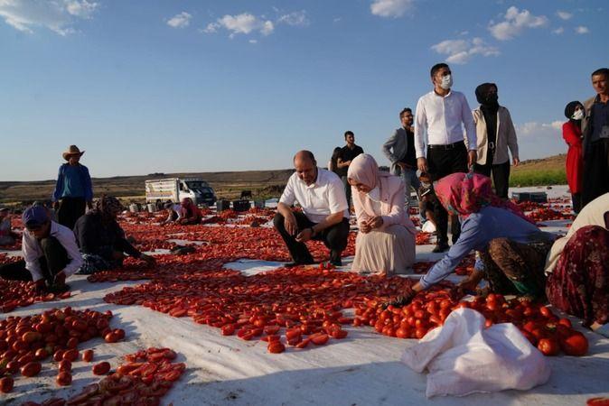 Urfa'da kurutulup dünyaya ihraç ediliyor