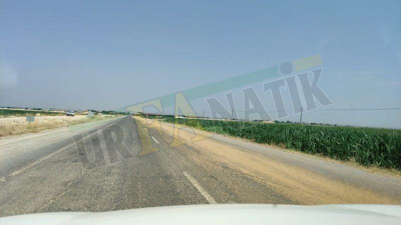 Urfa'da dökülen buğday kazaya neden olmadan toplandı!