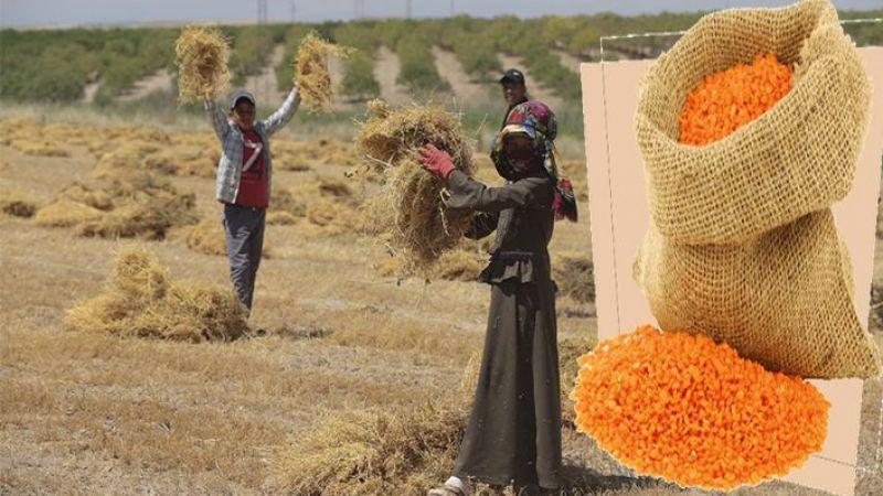 Urfa'da kilosu 7,75 ve 8,37 lira arasında satıldı