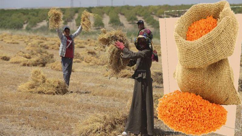 Şanlıurfa'da kilosu 8,97 liradan satıldı