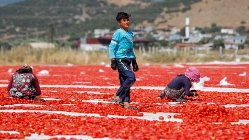 Siverekli tarım işçilerinin Ege bölgesinde zorlu mesaisi