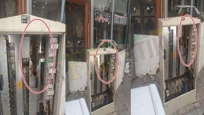 Viranşehir'de kedi girdiği elektrik panosunda telef oldu