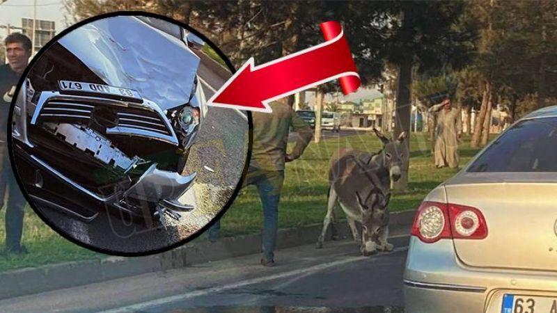 Şanlıurfa'da yola çıkan eşekler kazaya neden oldu