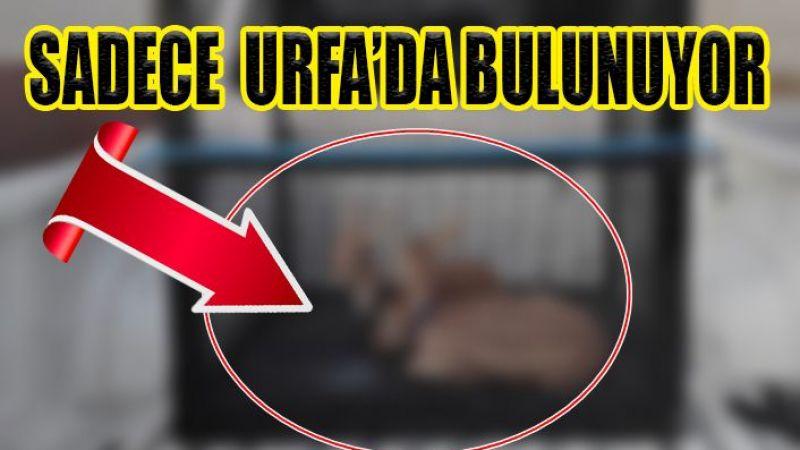 Urfa'dan Kırıkkale'ye götürdü: El konuldu