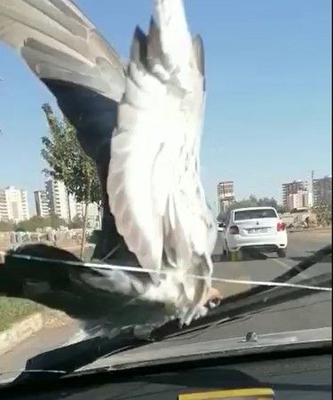 Otomobilde seyahat ediyor