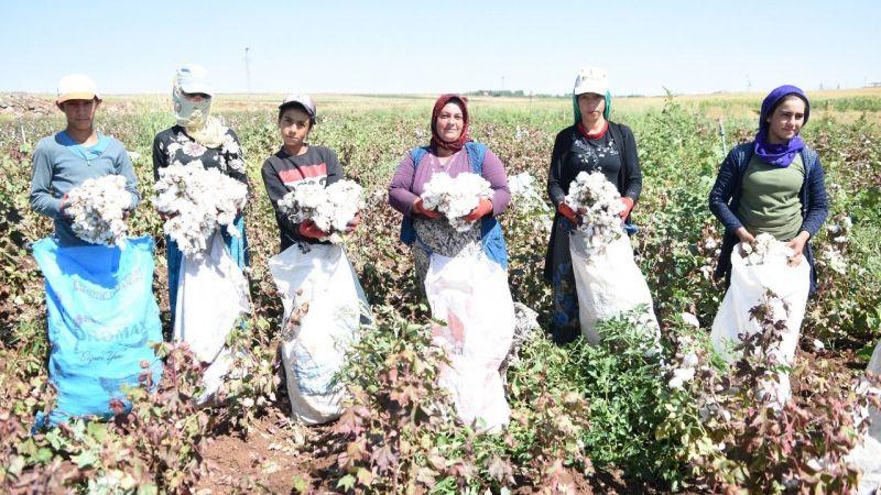 Şanlıurfa'da şarkılı türkülü hasat