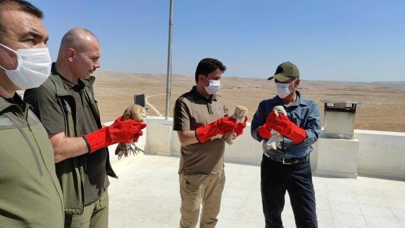 Urfa'da tedavisi tamamlanan kuşlar doğaya salındı!