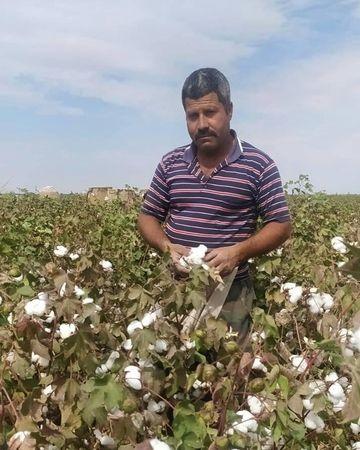 Pamuk diyarı Şanlıurfa'da hasat devam ediyor