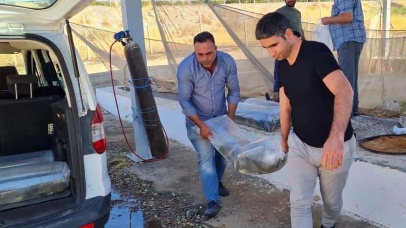 Urfa'dan Siirt'e gönderildi: Tam 585 bin adet