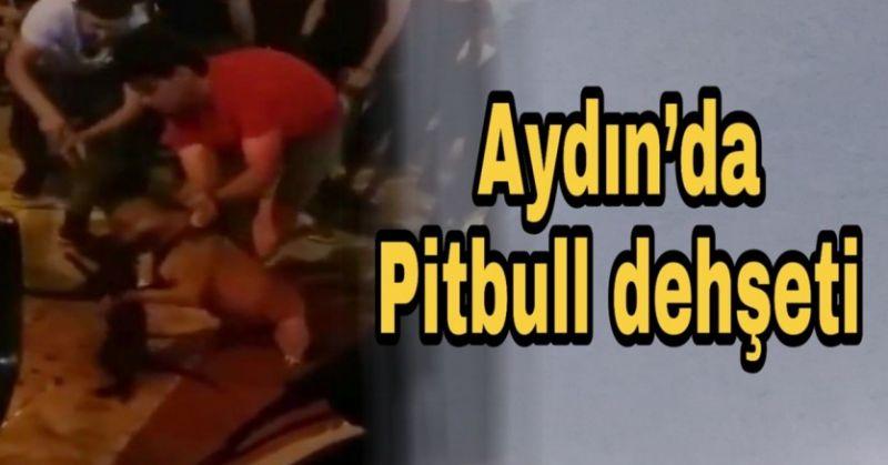 AYDIN'DA PİTBULL DEHŞETİ