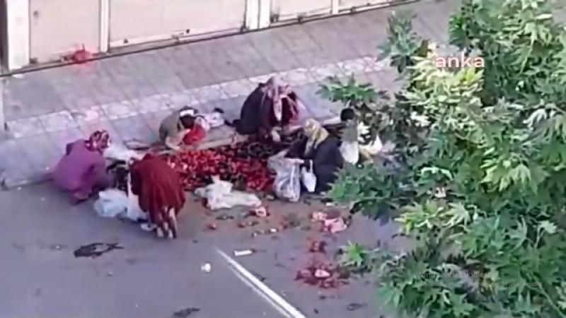 Bu utanç kimin? Çöpe atılan sebze ve meyveleri topladılar