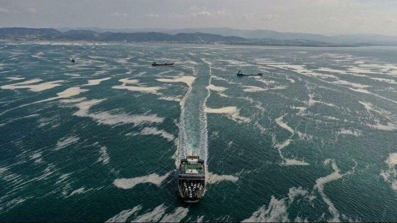 Yıllar önce verilen deniz salyası mücadelesine AKP engel olmuş!