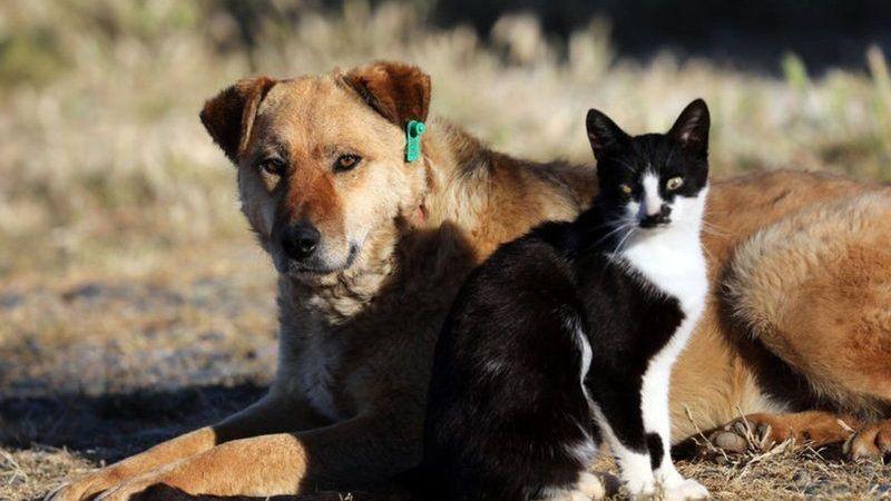 'Hayvanları Koruma Kanunu' teklifi TBMM'de kabul edildi! İşte yasanın detayları