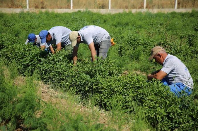 Başkan Çerçioğlu: Sağlıklı sebzeleri çocuklarımız için üretiyoruz