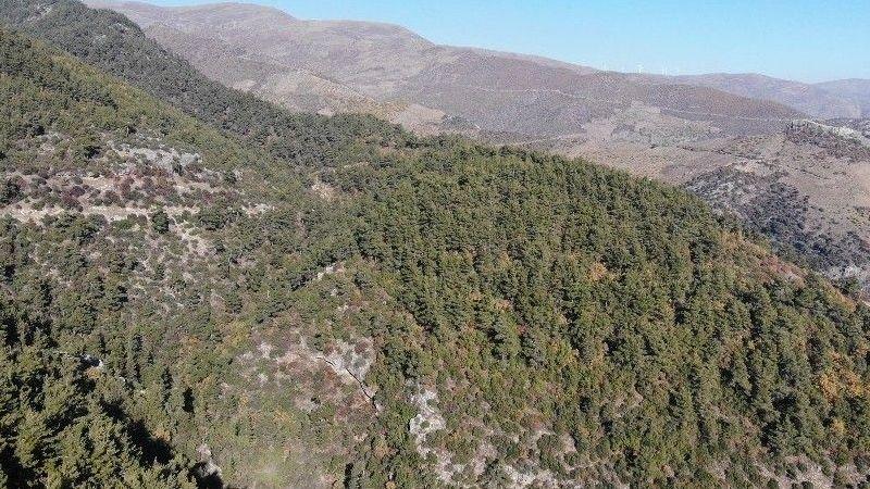Aydın Valiliği açıkladı: İl genelinde ormanlık alanlara giriş yasak