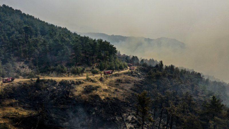 Manavgat'taki yangını 12 yaşında bir çocuğun çıkardığı tespit edildi