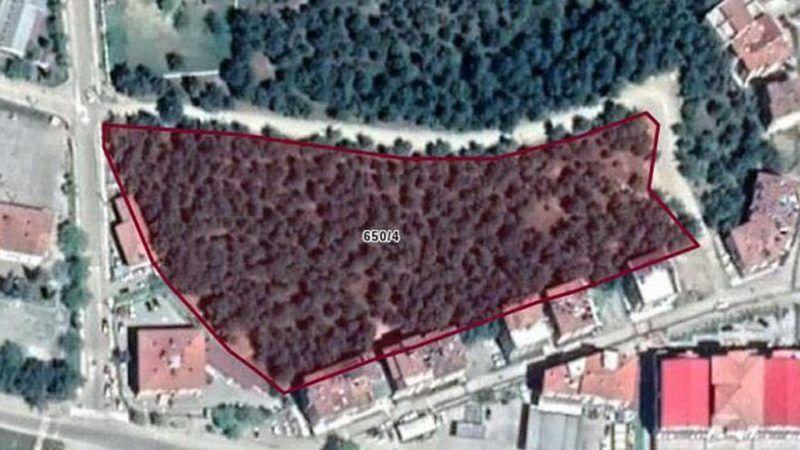 AKP'li belediye ormanlık alanı imara açtı