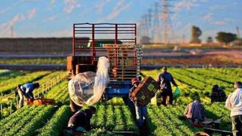 Çiftçinin isyanı Tarım Kredi'ye yorum kapattırdı