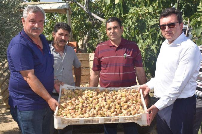 Protokol, köylülerle incir hasadına katıldı