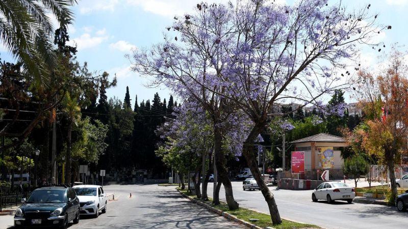 Kuşadası Belediyesi'nden ağaç dikim seferberliği