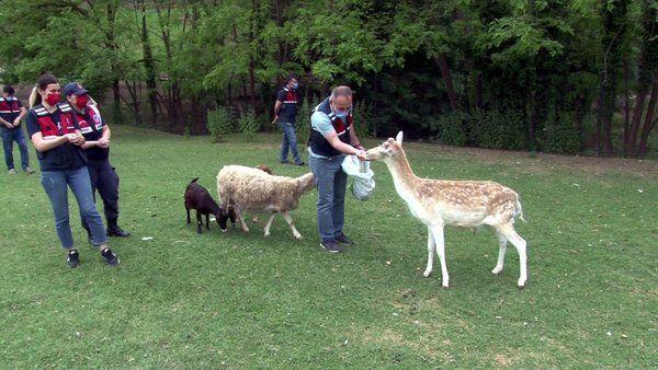 Hendek'ten çalınan Geyikler Urfa'da bulundu
