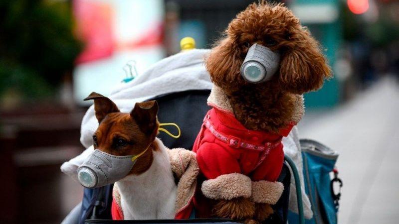 Köpekten insana geçen korona tespit edildi