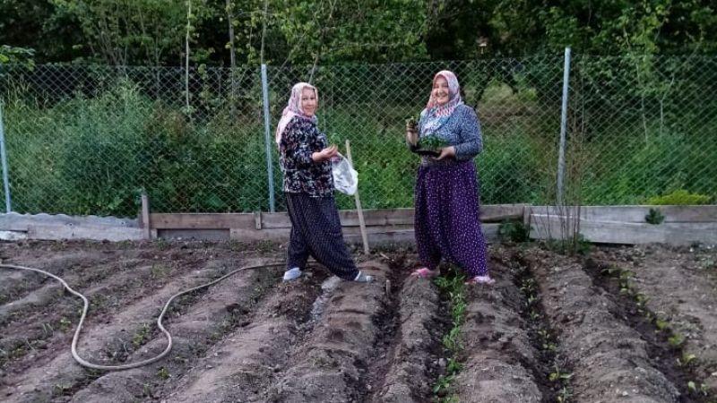 CHP vatandaşa sebze fidesi dağıttı