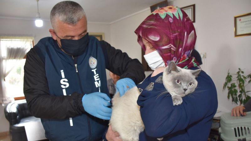 Erenler'de hayvanlara kuduz aşısı vuruluyor