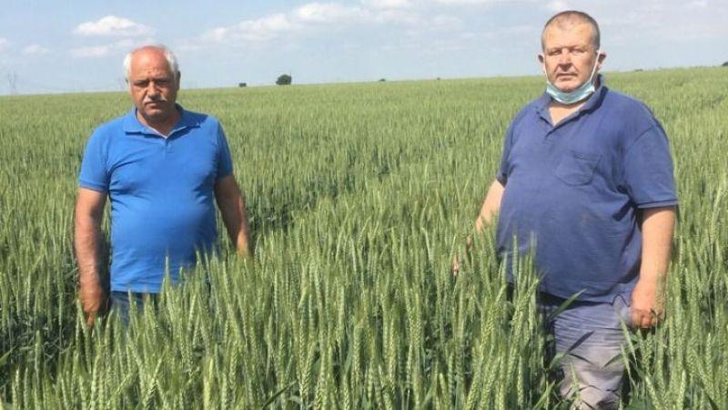 Halis buğday çiftçileri memnun etti