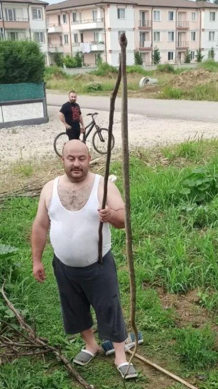 2,5 metrelik yılan çocukları korkuttu