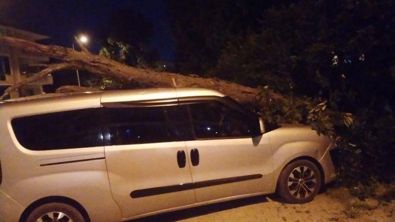 Kurumuş ağaç, aracın üzerine devrildi